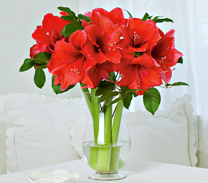 red amaryllis wedding bouquet
