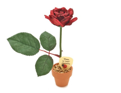 potted paper rose