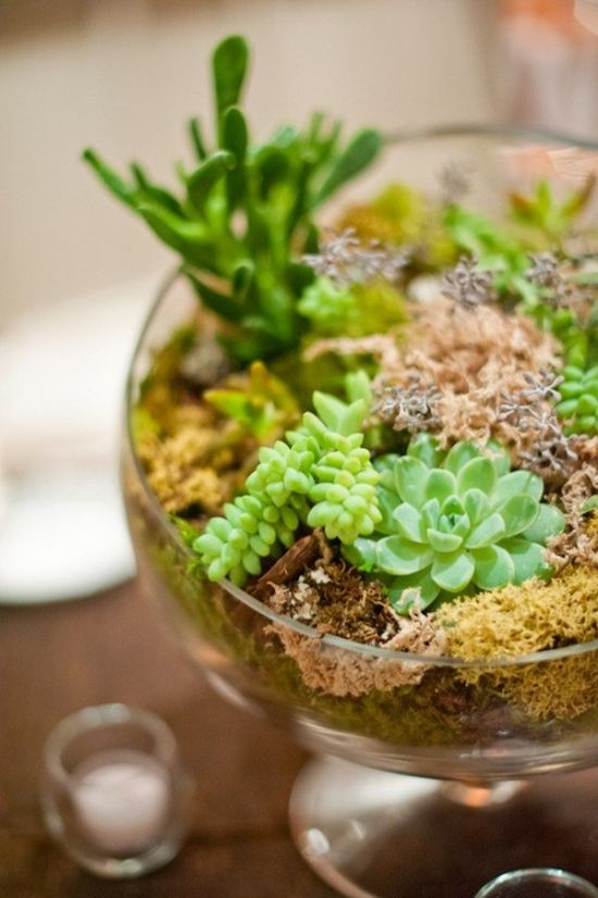 Bold Wedding Centerpiece Idea With Large Glass Terrarium With Lots Of Succulents