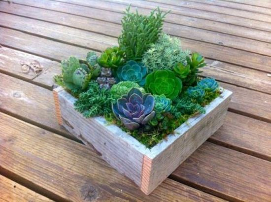 Rustic Wedding Centerpiece Of A Wooden Box With Various Succulents