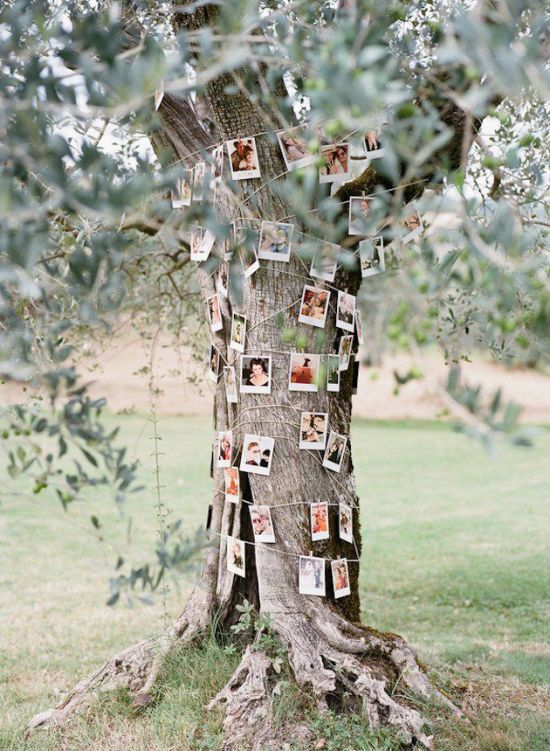 Tree Trunk Photo Display Spring Wedding Decor