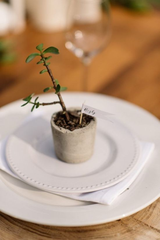 A Wedding Table Décor With Small Potted Succulent In A Concrete Planter With A Name For A Favor And Place Card