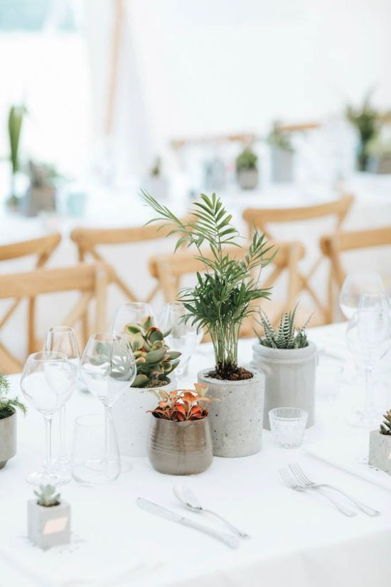 Potted Greenery In Concrete For Simple And Modern Wedding Table Decor